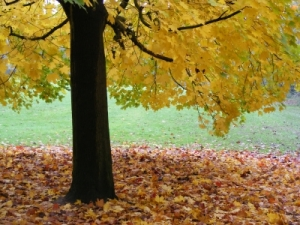 Fall is coming! Is your furnace ready?